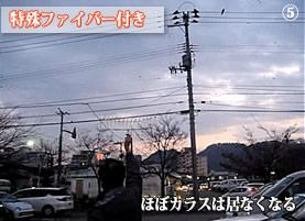 カラス撃退実験-5